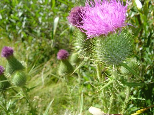 Something Pretty...but poisonus